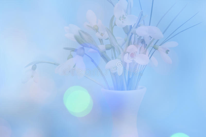 Double exposure of delicate snowdrops with a blue bokeh background stock photos