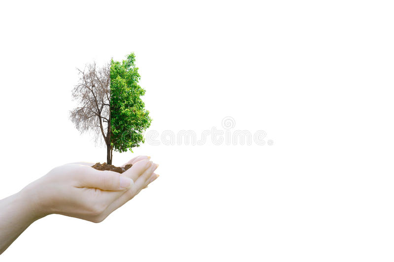 Double Exposure Ecology concept Human hands holding stock photo