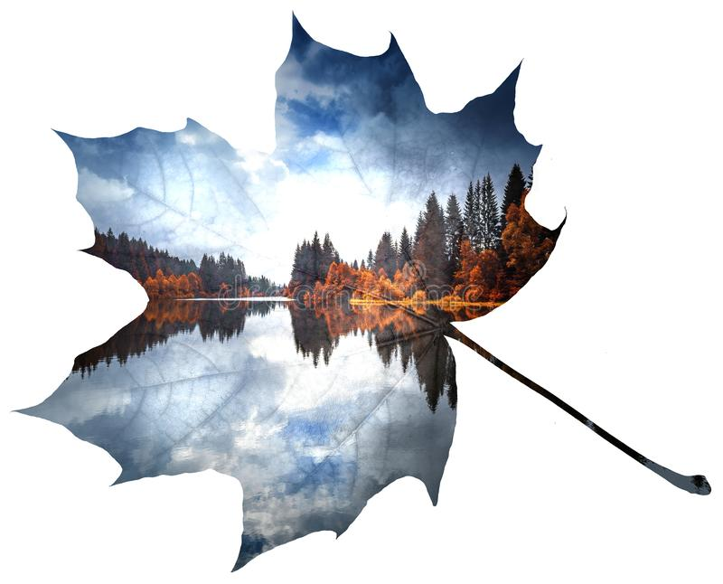 Double exposure leaf and landscape. Lake in a forest double exposure with leaf stock photos