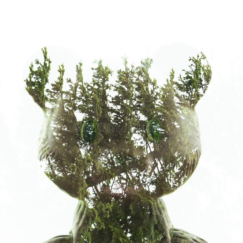 Double exposure, teddy bear and fir tree royalty free stock images