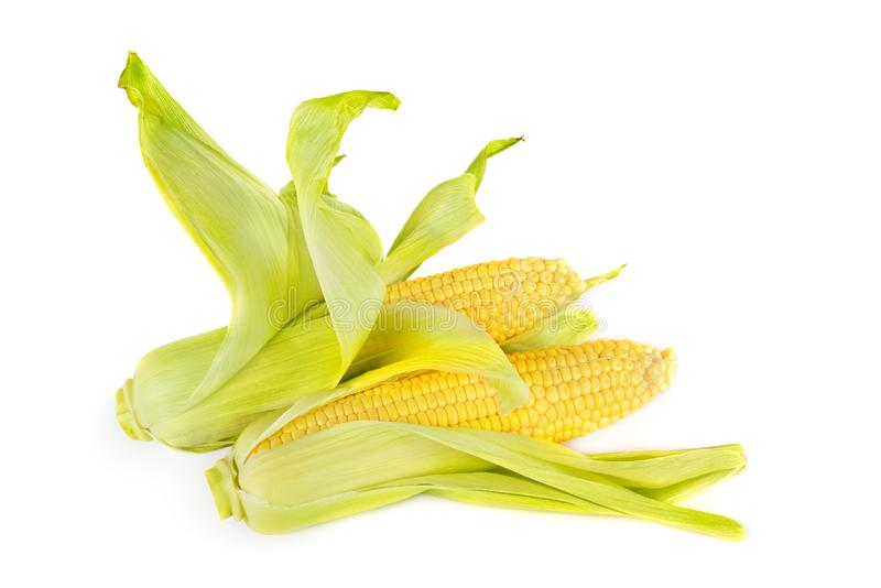Double sweet corn ears isolated on white background royalty free stock photos
