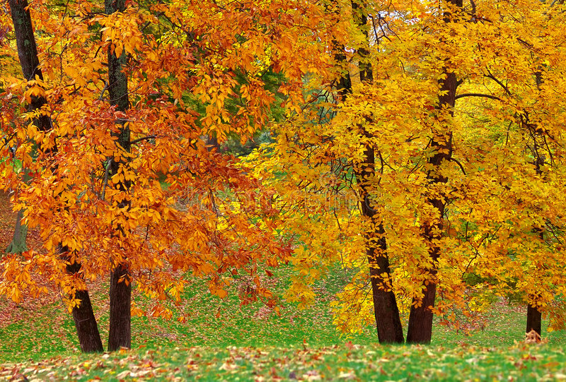 Double Trees stock photography