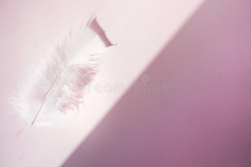 Doucement, plumes blanches pelucheuses sur le fond rose Style de minimalisme photo stock