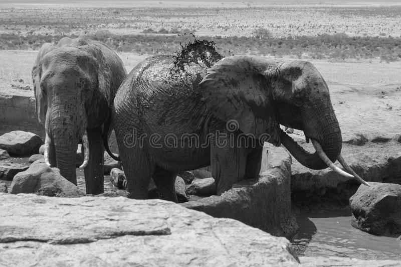 Douche d'éléphant images stock
