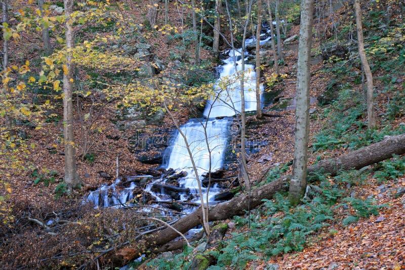 Download The Douglas Falls stock photo. Image of stream, falls - 3491914