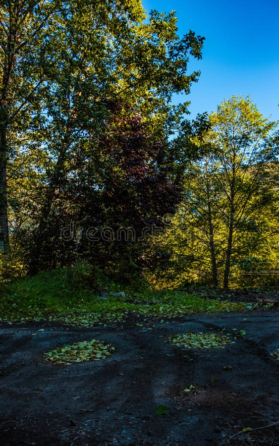 Douglas Island Alaska, foglie cadenti immagine stock