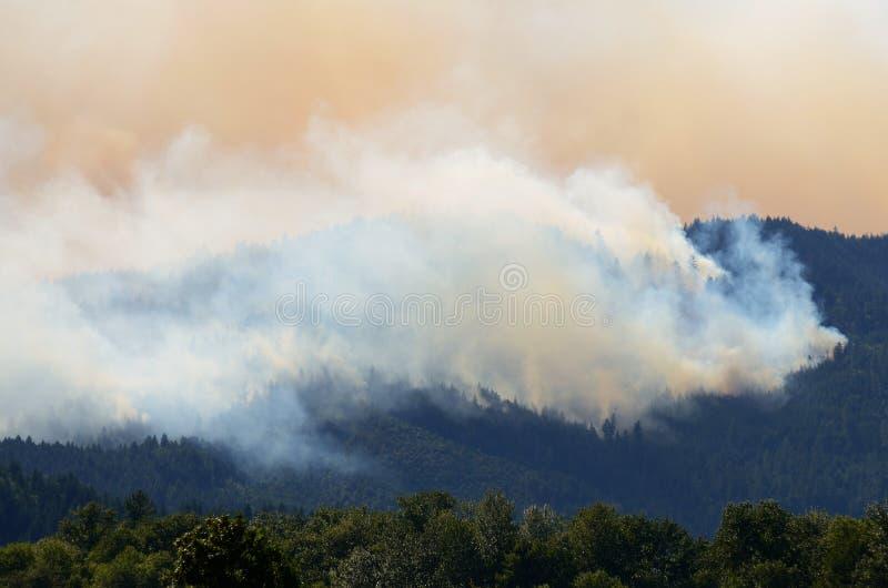 Download Douglas Smoke stock photo. Image of nature, tree, cover - 34148720