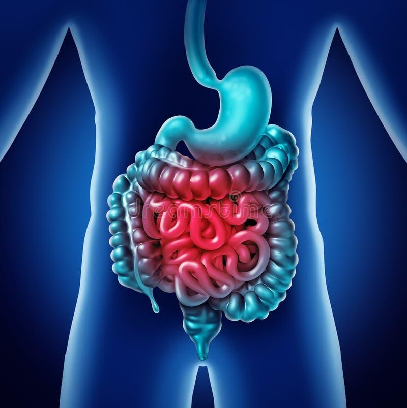 Douleur d'intestin illustration stock