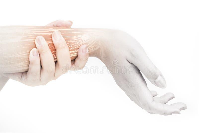 Douleur musculaire d'avant-bras photo stock