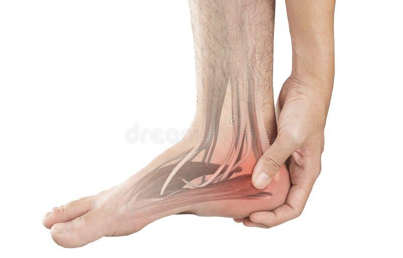 Douleur musculaire de talon image stock