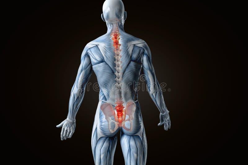 Douleurs de dos anatomiques de vision illustration 3D illustration libre de droits