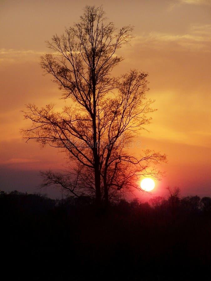 Download Dourado foto de stock. Imagem de vistas, sunsets, paisagens - 112608