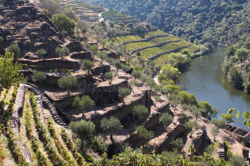 douro葡萄园 图库摄影