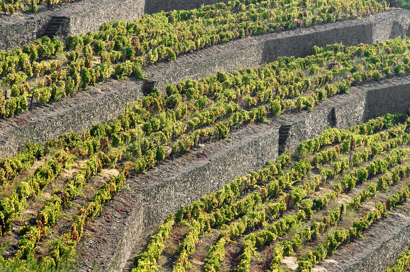 Douro images stock