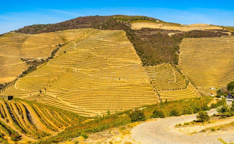 Douro doliny winnicy zdjęcie stock