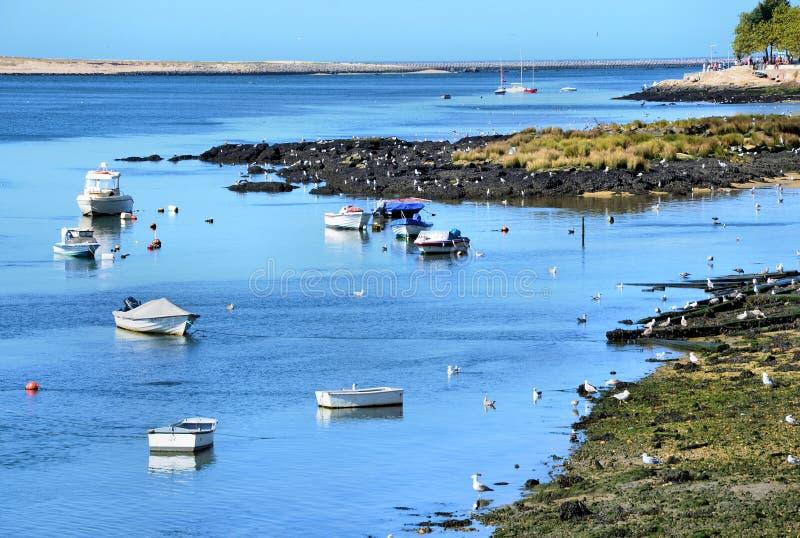 Download Douro river estuary stock image. Image of estuary, seagull - 21282677