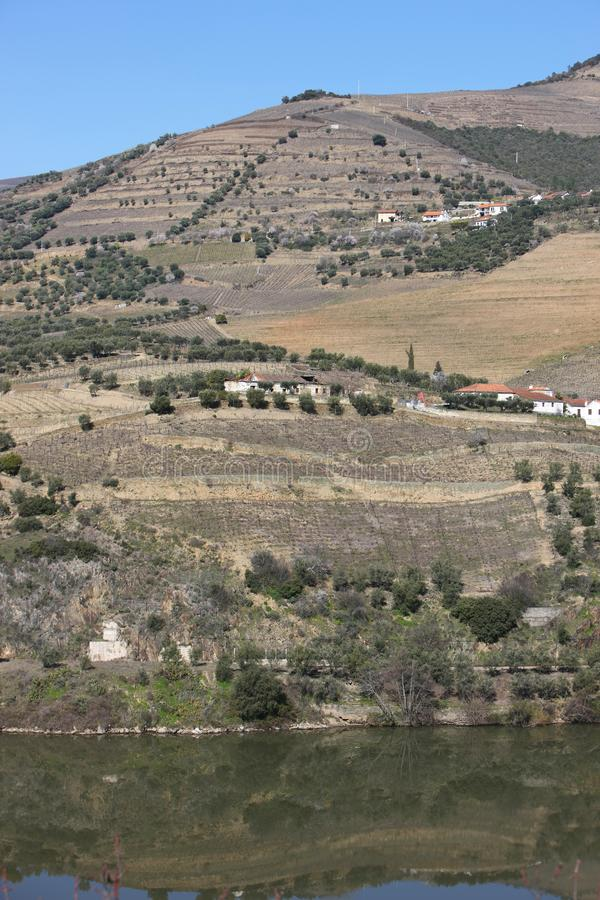 Download Douro river landscape stock photo. Image of harvesting - 8380598