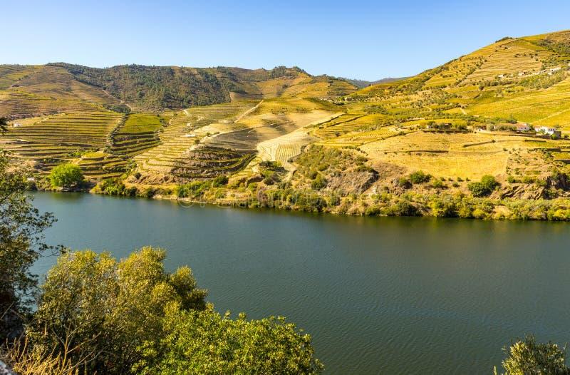 douro rzeki dolina zdjęcia stock