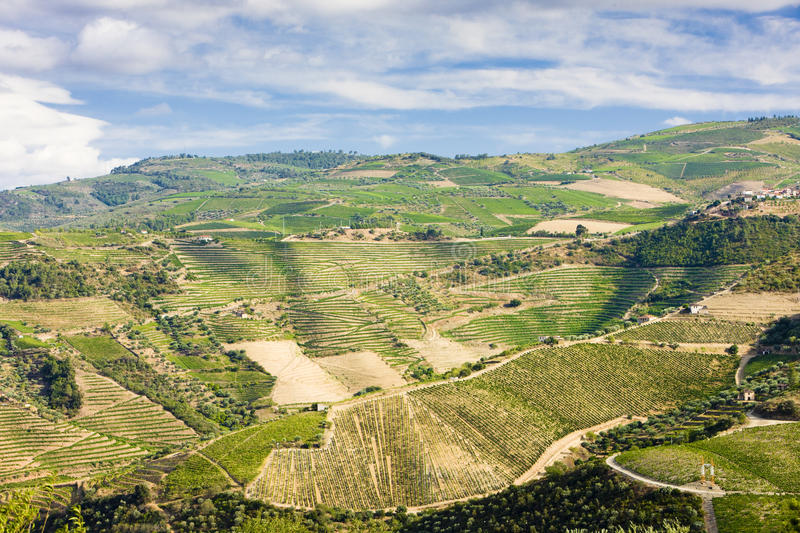 Download Douro Valley stock photo. Image of valley, valleys, nature - 15900964