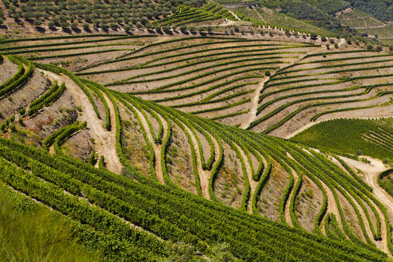 Douro Valley. Ladscape in Douro Valley in Portugal royalty free stock photography