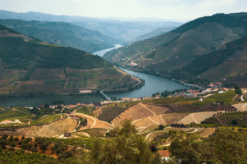 Douro Valley, Portugal. Top view of river. Douro Valley, Portugal. Top view of river, and the vineyards are on a hills royalty free stock images