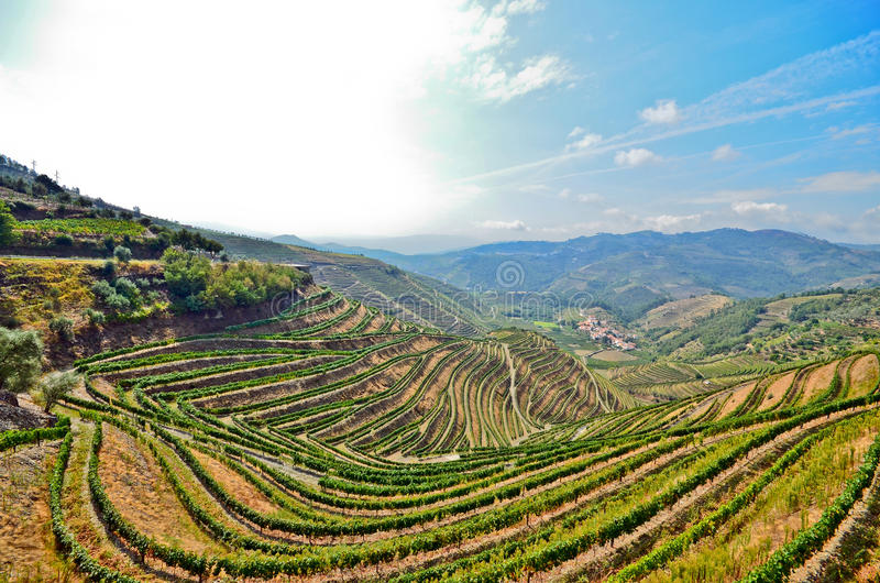 Douro Valley: Vineyards near Duero river around Pinhao, Portugal. Famous wine region in Europe stock photo