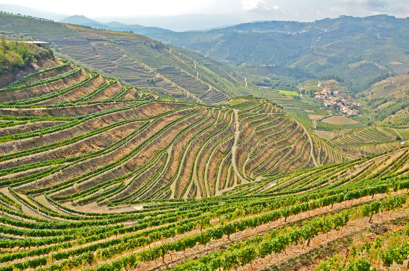 Douro Valley: Vineyards near Duero river and Pinhao, Portugal. Europe stock photos