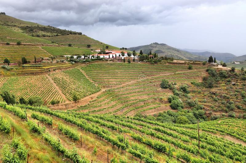 Douro vineyards, Portugal stock images