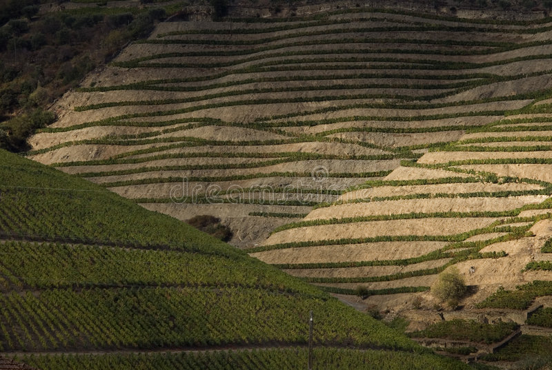 Douro2 stock fotografie