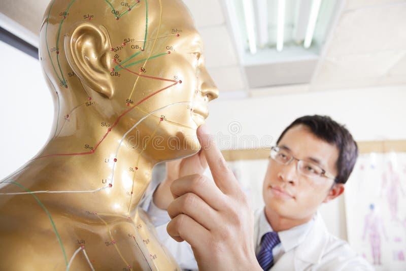 Doutor da medicina chinesa que ensina Acupoint foto de stock royalty free
