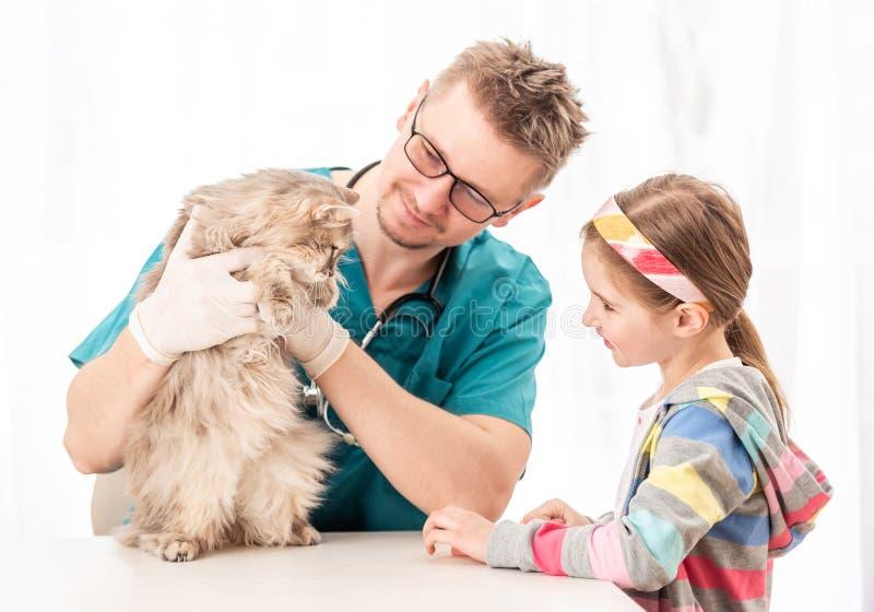 Doutor do veterinário que verifica o gato para ver se há doenças fotografia de stock royalty free