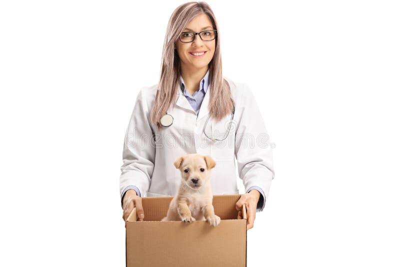 Doutor fêmea novo do veterinário que guarda um cachorrinho em uma caixa fotografia de stock royalty free