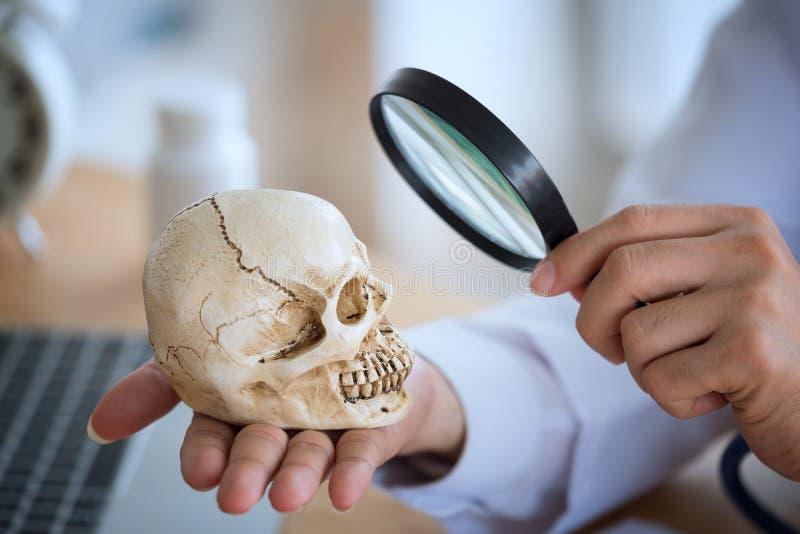 Doutor novo com uma lupa e a observação do skul humano fotografia de stock royalty free