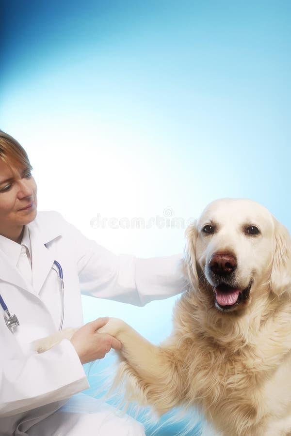 Doutor veterinário com cão imagens de stock