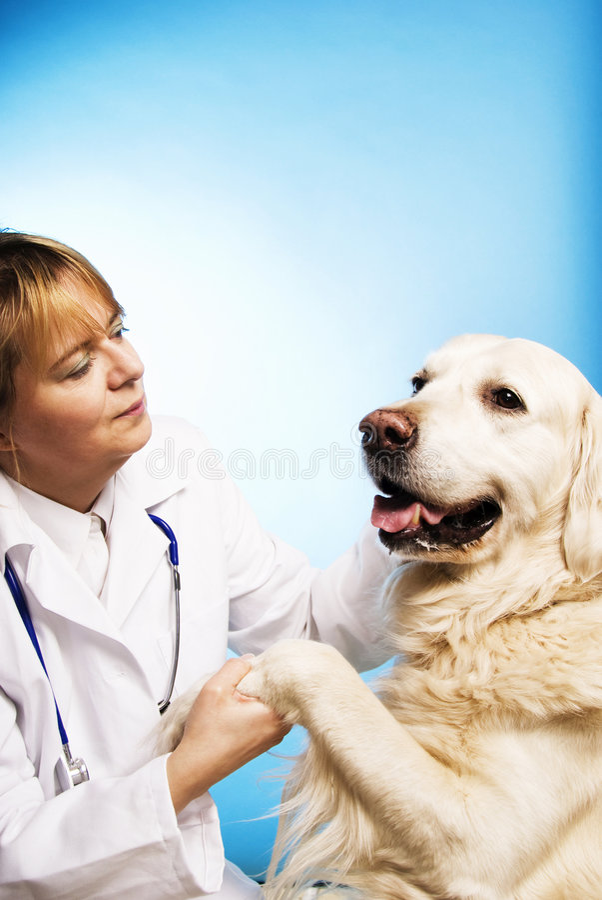 Doutor veterinário com cão fotos de stock