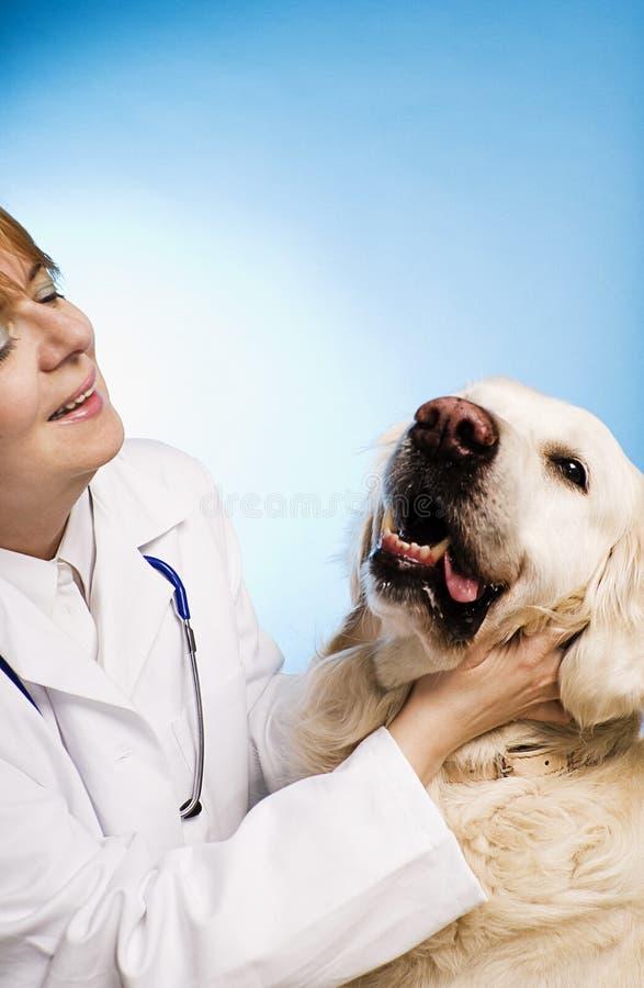 Doutor veterinário com cão fotos de stock royalty free
