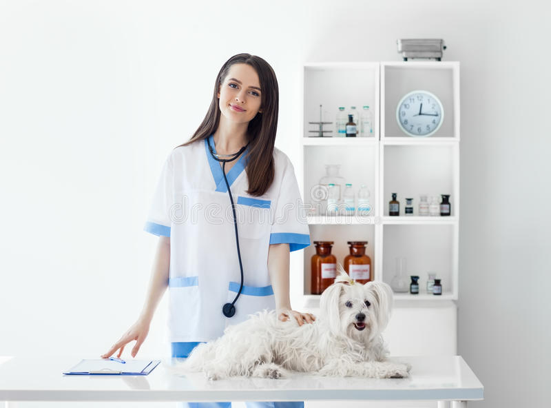 Doutor veterinário de sorriso bonito e cão branco bonito no veterinário imagens de stock