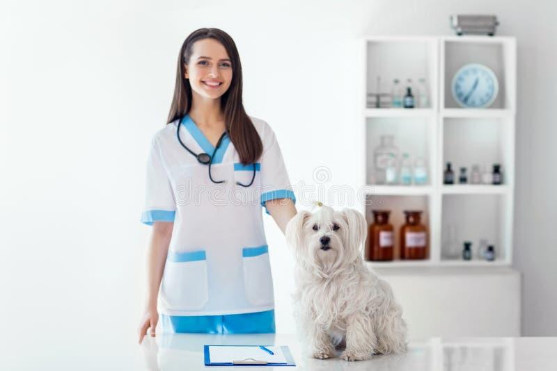 Doutor veterinário de sorriso bonito e cão branco bonito no veterinário fotografia de stock royalty free