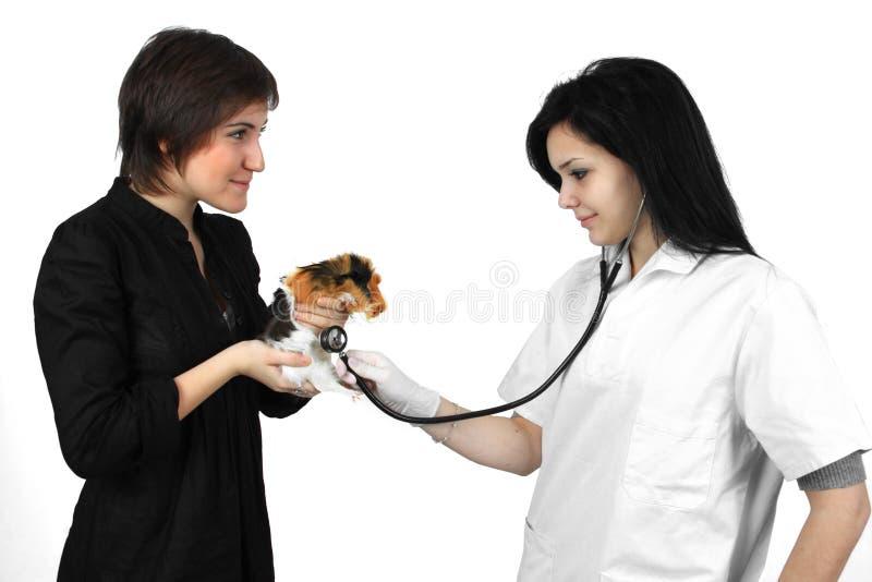 Doutor veterinário que faz um controle de um animal de estimação fotografia de stock