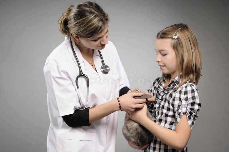 Doutor veterinário que trabalha com animal de estimação fotos de stock royalty free