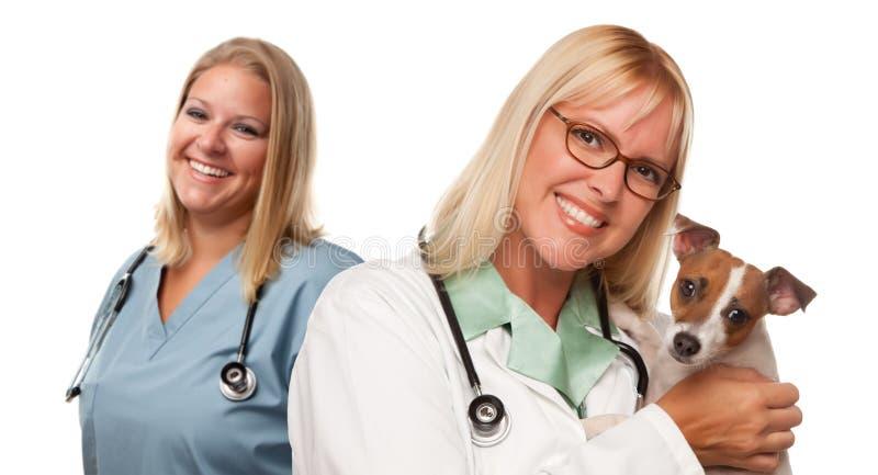 Doutores veterinários fêmeas com filhote de cachorro pequeno imagens de stock