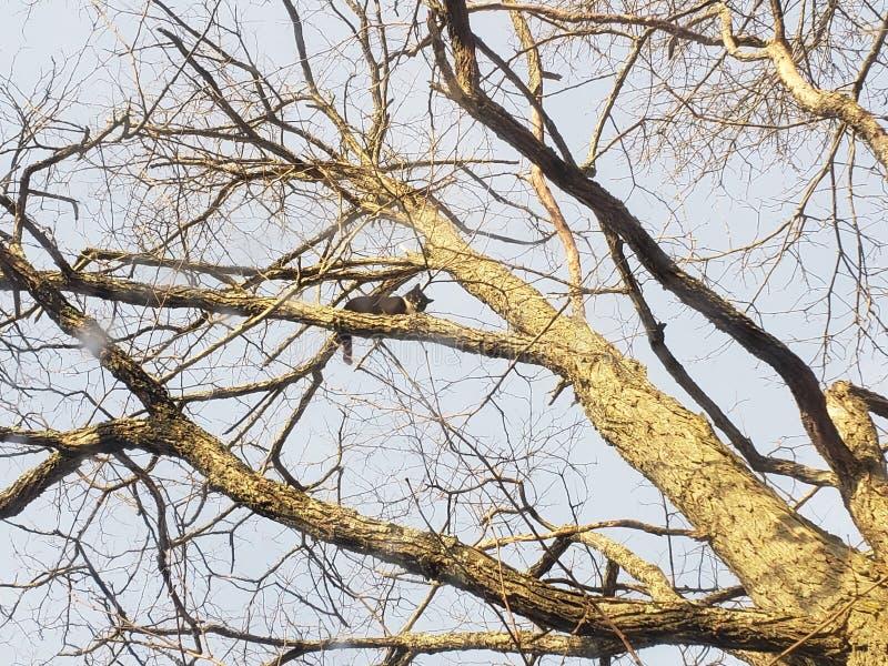 Dov'è andato il mio gatto, bloccato su un albero immagini stock