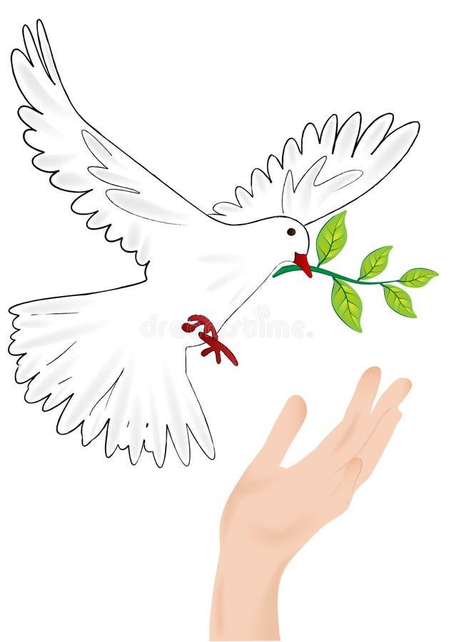 Dove vector illustration