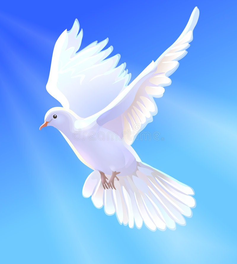 Dove. White dove in the clear sky