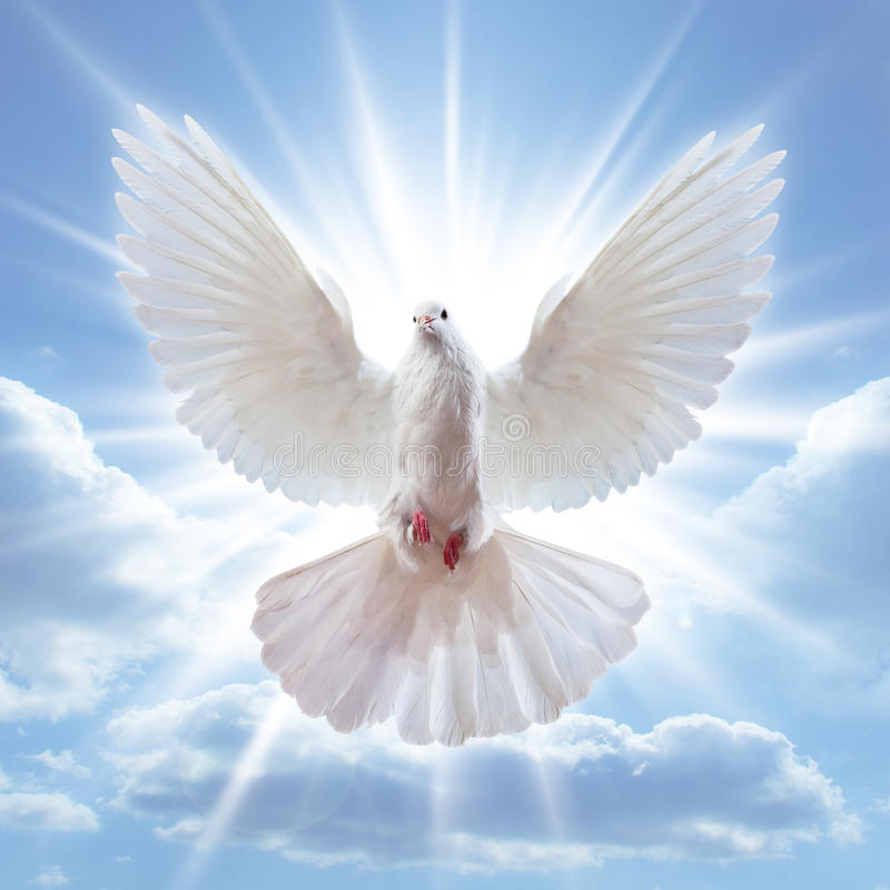 Dove in the air with wings wide open. In-front of the sun