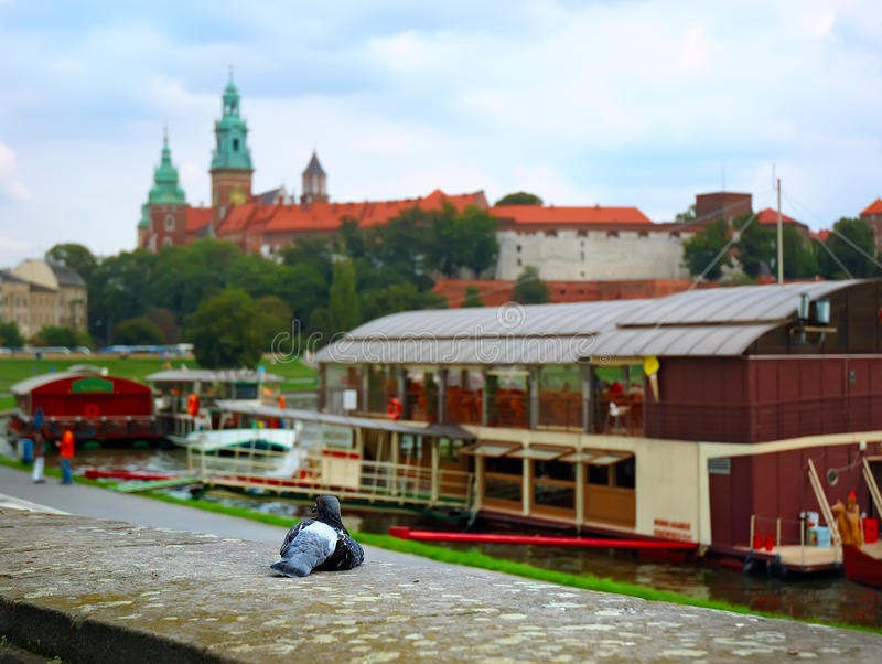 Dove And Castle In Krakow Stock Photography