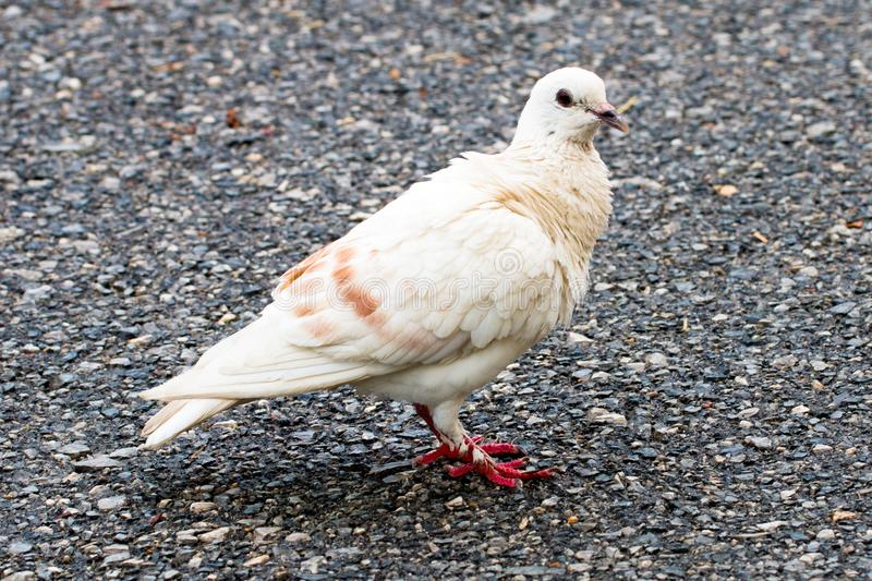 Dove on background technical cost-up. royalty free stock photo