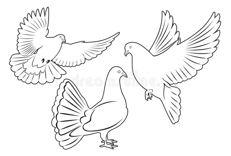 Dove. The figure shows a dove royalty free illustration