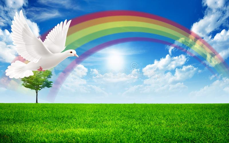Dove flying in a rainbow landscape royalty free stock photo