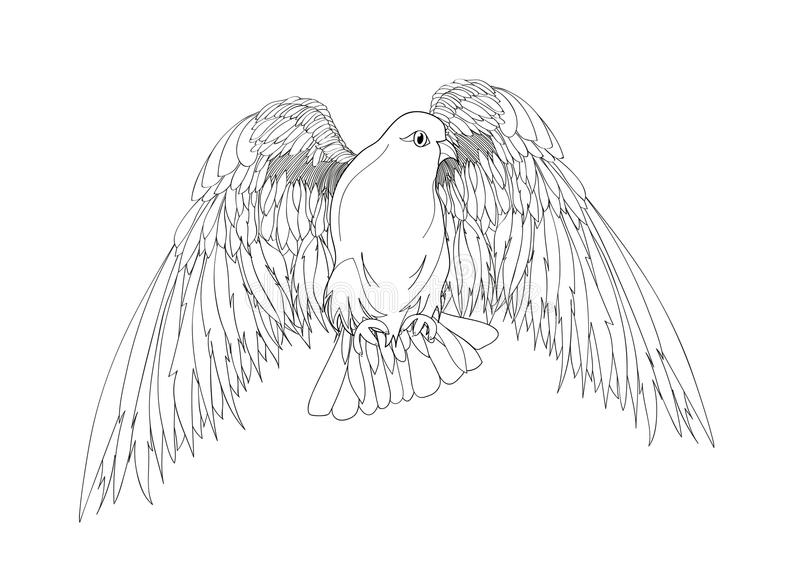 Dove in free flight. Bird with wings down. Isolated vector. On white background. Drawn by hand in black ink stock illustration